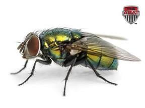 la mouche verte de la