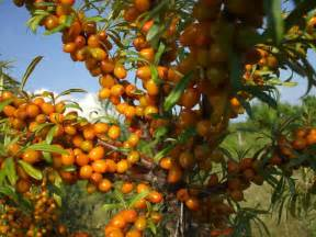 fruit trees buy 25 best ideas about buy fruit trees on