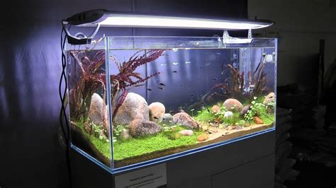 Green Machine Aquascape by Aquascape By Findley The Green Machine Through