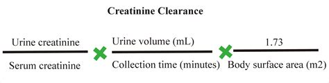 creatinine urine mg dl creatinine clearance equation 24 hour urine tessshebaylo