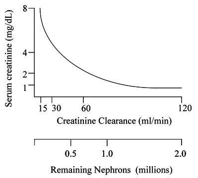 creatinine serum low 17 best images about creatinine on medicine