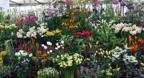 17 best images about gardening spring bulbs on pinterest bulbs that return to the garden year