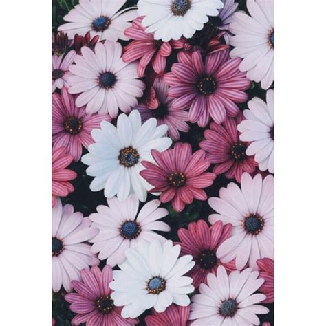imágenes de flores wallpapers flowers iphone wallpapers image 3076389 by winterkiss