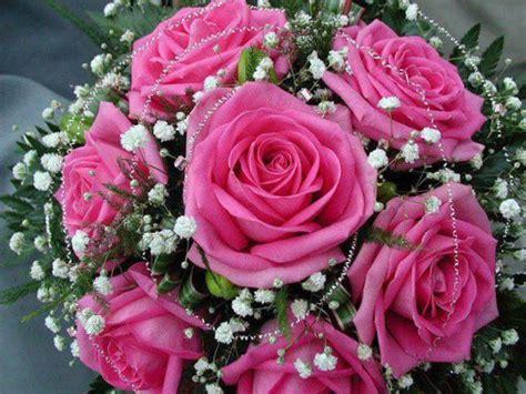 imagenes de wasap de flores seis bonitas rosas palanquinos
