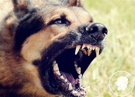 how to aggressive for aggressive dogs how to fix a with separation anxiety