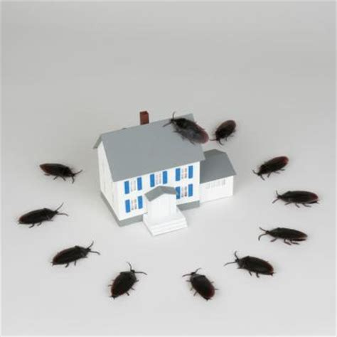 how to keep water bugs out of your house how to keep water bugs and roaches out of the house home guides sf gate