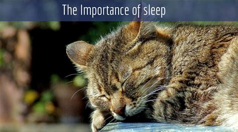 The Importance Of An Afternoon Nap by If You Want A Better Day Hit The Hay The Indisputable