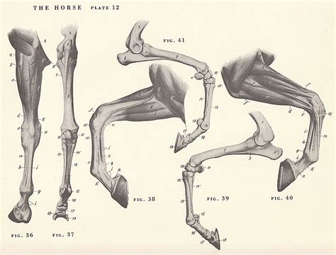 Goat Hoof Diagram Goat Leg Diagram Elsavadorla | Www.123paintcolor ...