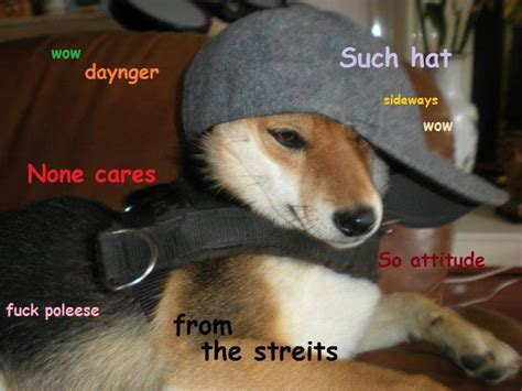 Such Dog Meme - ot wow such doge genius