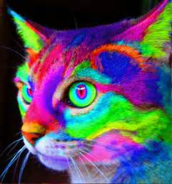 colorful cats trippy psychedelic gifs gallery ebaum s world