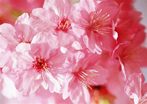 complementary of pink весна цветы красиво фото обои на рабочий стол