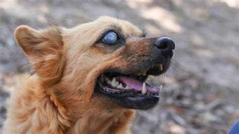 pet owners celebrate partially sighted pooches