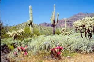 Desert Botanical Gardens Az Desert Botanical Gardens Az Beautiful Nature