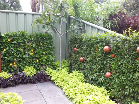 backyard lemon tree a foodie s garden melbourne international flower and