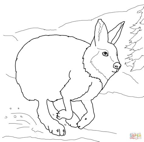 running arctic hare coloring online super coloring