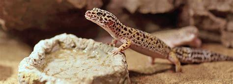 reptile terrarium setup petsmart