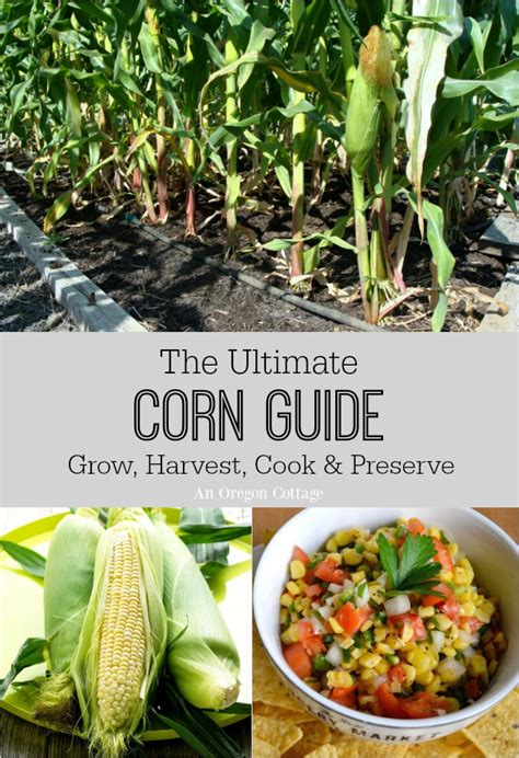 E Book The Artist The Cook The Gardener the ultimate corn guide grow harvest cook preserve