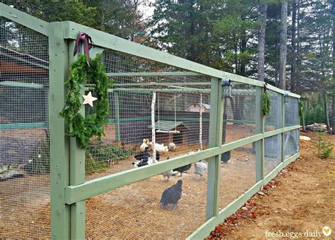 building a run building a predator proof chicken run fresh eggs daily 174