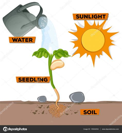 plants that do not need sunlight plants that do not need sunlight plants that do not