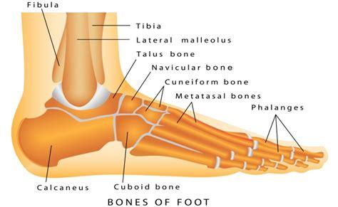 foot diagnosis diagram lefort podiatry bones of the foot diagram