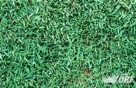 Queensland Blue Couch Turf Supplies Gold Coast Sunshine
