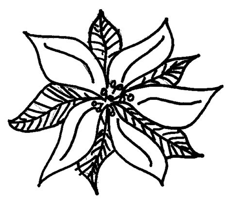 coloring page christmas flower christmas poinsettia coloring pages