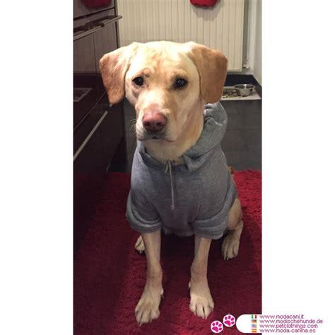 canapé pour chien grande taille v 234 tements pour gros chien sweat shirt uni gris pour