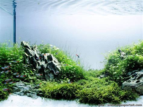 amano aquascape l aquascaping d 233 finition et explications illustr 233 es