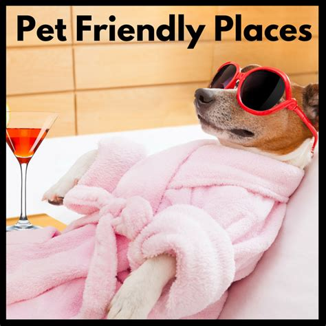places that allow dogs pet friendly places diy grooming help