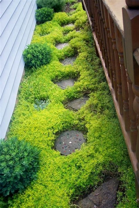 backyard ground cover ideas 32 cheap and easy backyard ideas that are borderline