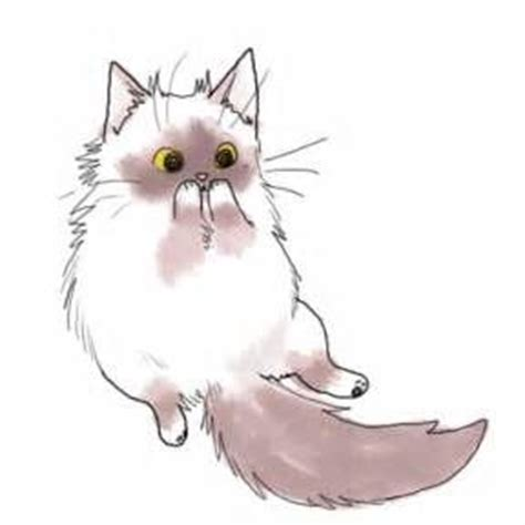 cute cat drawings 275 best animales images on pinterest drawing ideas