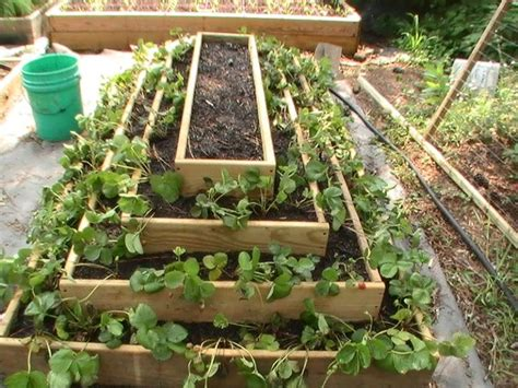 strawberry planter ideas best 25 strawberry planters ideas on strawberry tower traditional garden hoses and