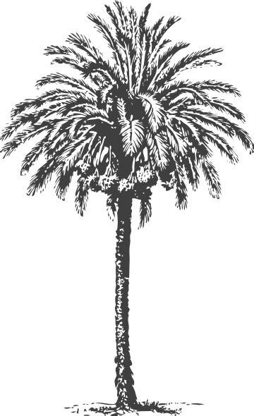 date palm clip art  clkercom vector clip art