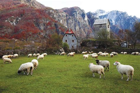 in albania albania mania modern farmer
