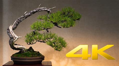 saitama omiya bonsai museum  ultra hd youtube