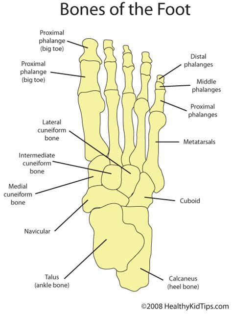 diagram of the foot bones human foot bones anatomy human anatomy charts