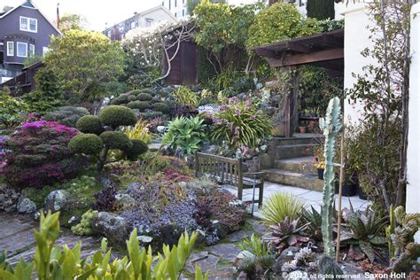 San Francisco Garden by San Francisco Garden With Magnolia Tree