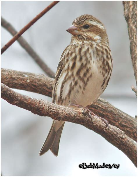 house finch food preferences for the birds city planter philadelphia