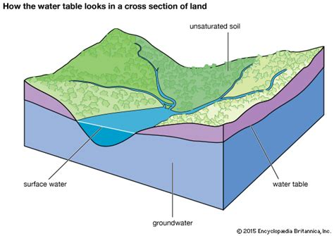 The Location Of The Water Table Is Subject To Change Groundwater Water Table In A Cross Section Of Land Encyclopedia Children S Homework