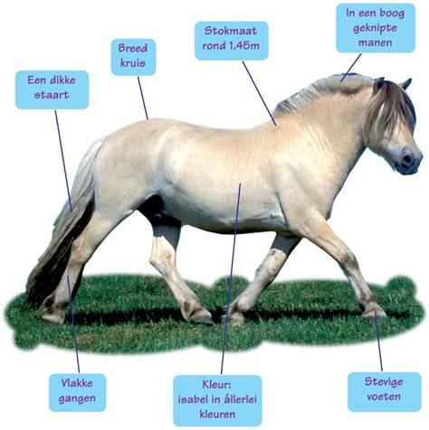 fjord mane fjord paardenrassen nederlandsepaardenblog jouwweb nl