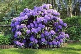 les plantes d ombre la jardin