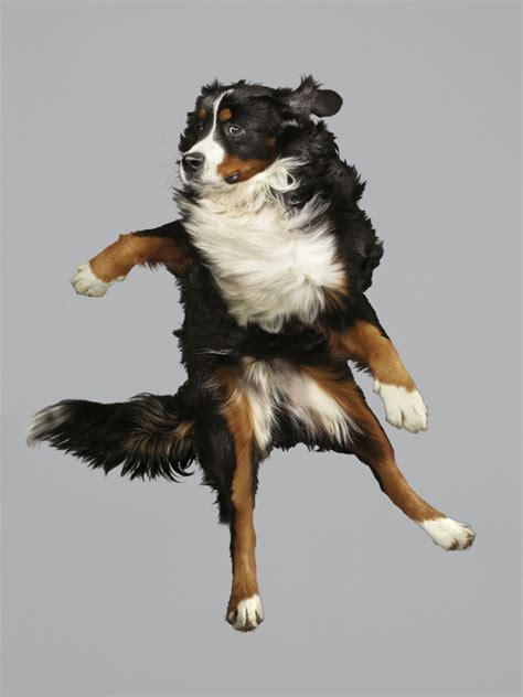 flying dogs look at christe s photos of dogs flying