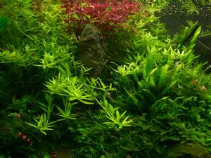 suitable plants aqua rebell