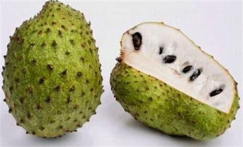 g fruit guanabana graviola o guan 225 bana para el sistema inmunol 243 gico cuidar