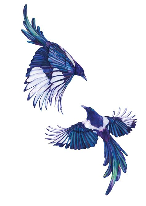 magpie tattoo design claudine o sullivan illustration magpies this