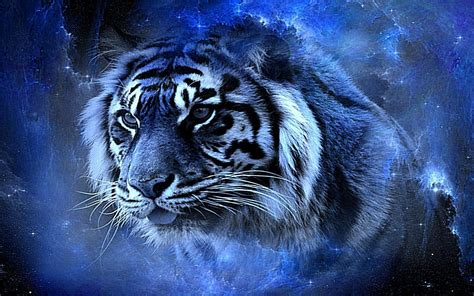 wallpaper tribal biru cool tiger backgrounds wallpaper cave