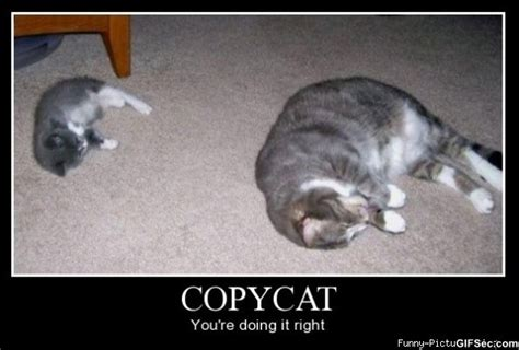 Copy Cat Meme - copycat quotes funny quotesgram