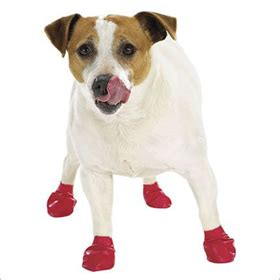 dogs walking in shoes top 5 shoes
