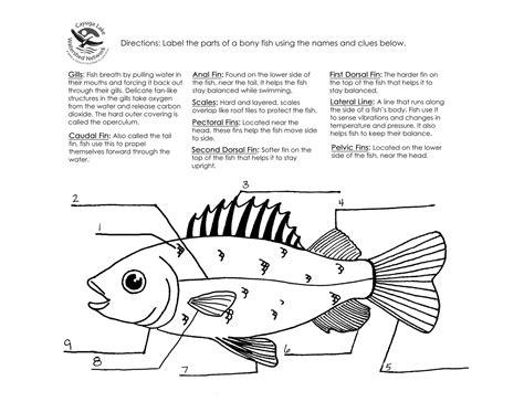 Fish Anatomy Worksheet pin bony fish anatomy worksheet on