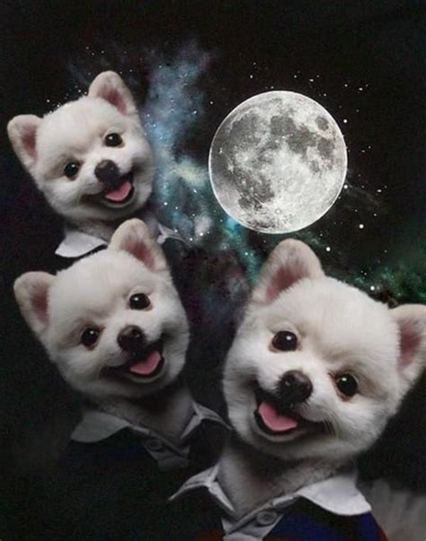 image 50185 three wolf moon know your meme